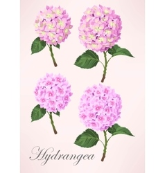 Set of hydrangea flowers vector image