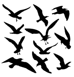 Flying birds black silhouettes set vector image