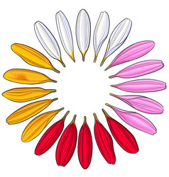 Set of hand drawn white pink yellow red gerbera vector