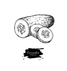 Cucumber hand drawn  isolated cucumber and vector