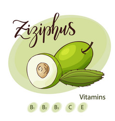 Fruit element of ziziphus hand drawn icon vector