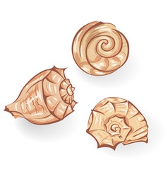 Sea seashells vector