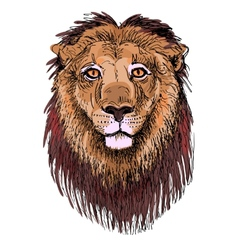artwork lion sketch drawing of head animals vector image