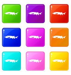 Fresh sturgeon fish icons 9 set vector