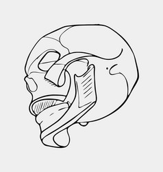 hand drawn black and white skull vector image