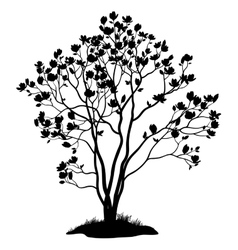 Magnolia tree with flowers and grass silhouette vector