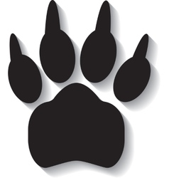 Paw print on white background vector image