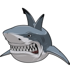 Angry white shark vector