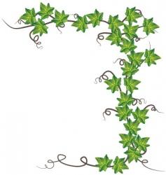 Green ivy vector