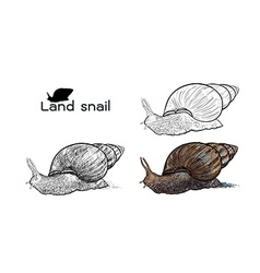 Crawling land snails vector