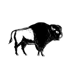 american buffalo side woodcut black and white vector image vector image