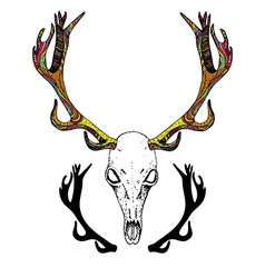 Color sketch deer skull vector