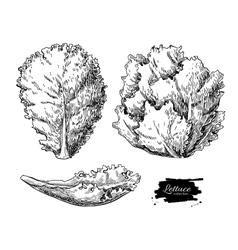 Lettuce hand drawn set vegetable engraved vector