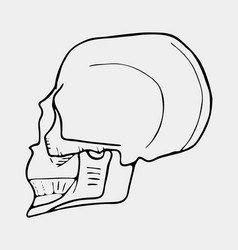 Hand drawn black and white skull vector