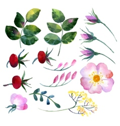 Set of watercolor elements rosehip vector