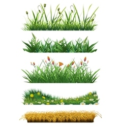 Grass set of elements vector image vector image