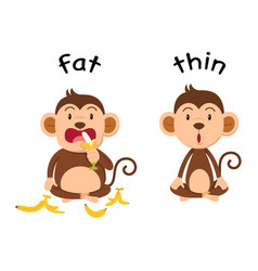 Opposite words fat and thin vector
