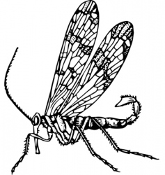 scorpionfly mecoptera vector image vector image