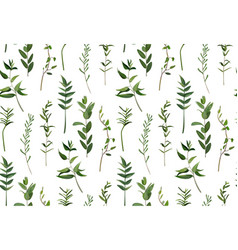 eucalyptus and greenery different tree foliage vector image vector image