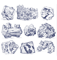 Fossilized plants stones and minerals crystals vector