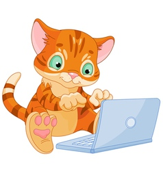Kitten with laptop vector