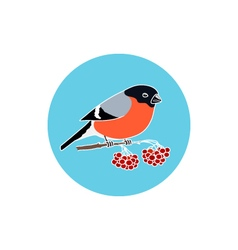 Icon colorful bullfinch vector