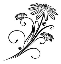 Black flowers vector image