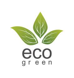 eco green leaf logo vector image vector image