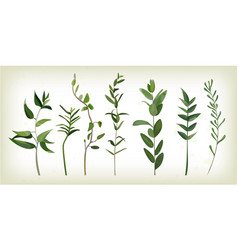 Eucalyptus agonis thyme designer art different vector