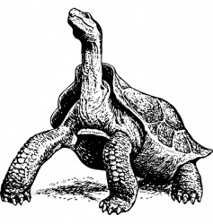 Giant turtle vector