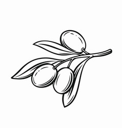 olive with leaves vector image
