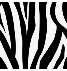 Zebra animal print pattern vector