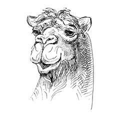 artwork camel sketch black and white drawing vector image vector image