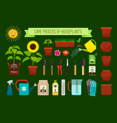houseplants care process icons vector image