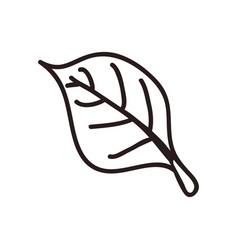 Leaf doodle nature vector