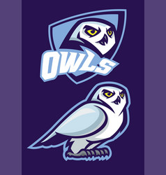 mascot of white owl with sport style vector image
