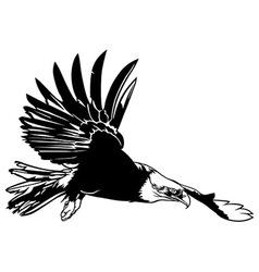 Flying bald eagle vector