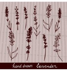 Hand drawn lavander set vector