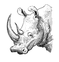 Artwork rhinoceros sketch black and white drawing vector