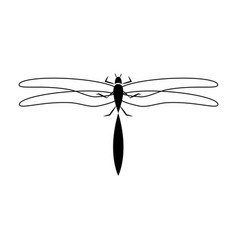 Dragon fly insect vector