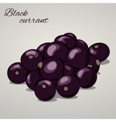 Cartoon sweet black currant on grey background vector