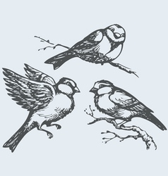 Tits sparrows and bullfinches on branch vector