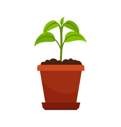 Houseplant in flower pot vector