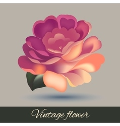 Flower element isolated vector