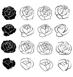 black rose flower design vector image