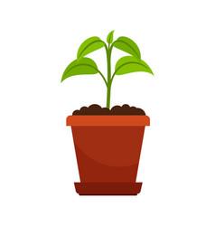 Houseplant in flower pot vector