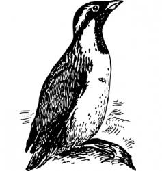 penguin synthliboramphus vector image vector image