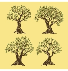 Set of greek olive oil trees in vintage style vector image vector image