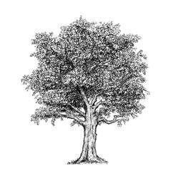 hand drawing drawn tree vector image