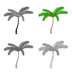 Mexican fan palm icon in cartoon style isolated on vector